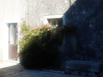 Where the Wild Roses Grow by FiorellaDePietro
