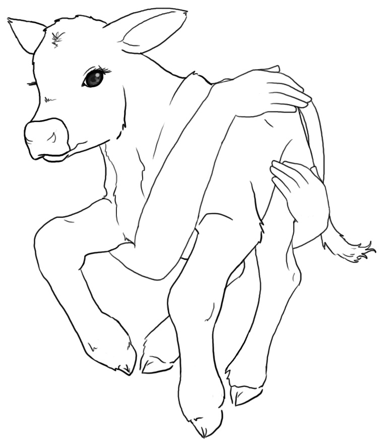 Image Result For Cows Coloring Pages