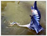Heron Attack