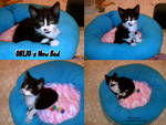 Pet Bed Tutorial by Yakkomia
