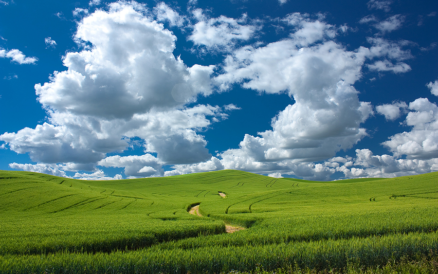 Palouse Hills by krovakny