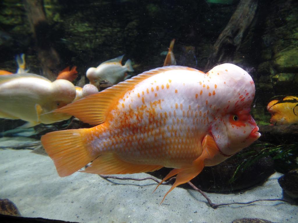 White-orange fish by pklaudia