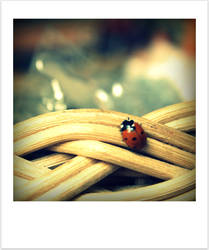 Little Lady Bug by Lilywen