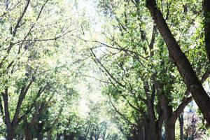 trees by depthdweller