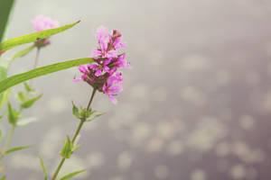purple flower by depthdweller