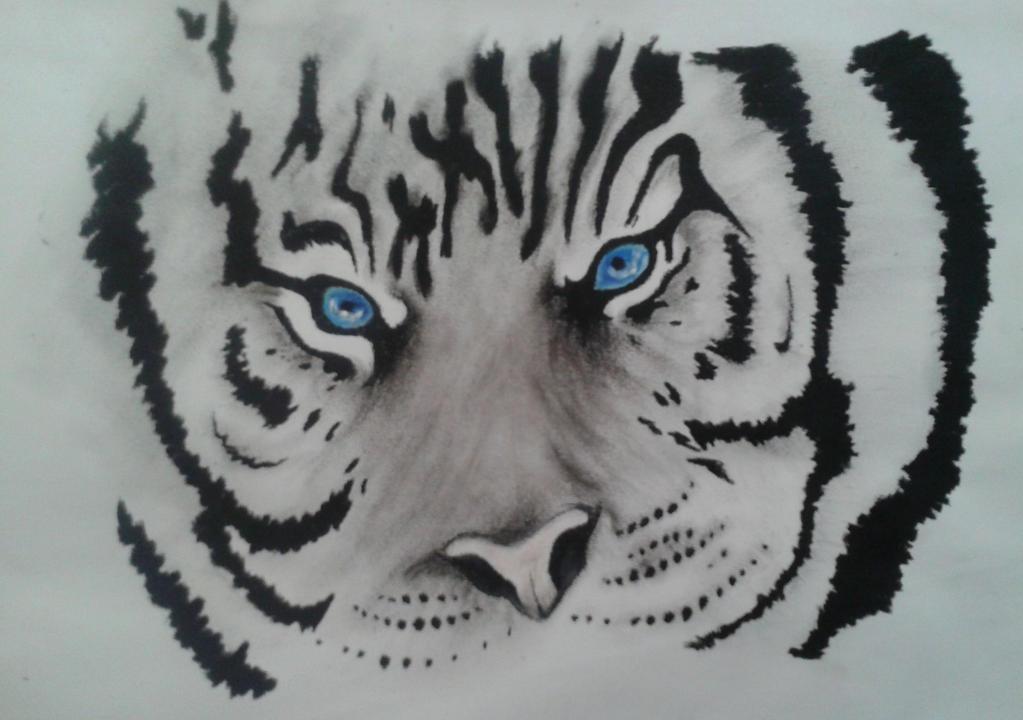 Blue Tiger Eyes Tumblr | www.imgkid.com - The Image Kid ...