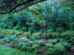 Celtic Wilderness