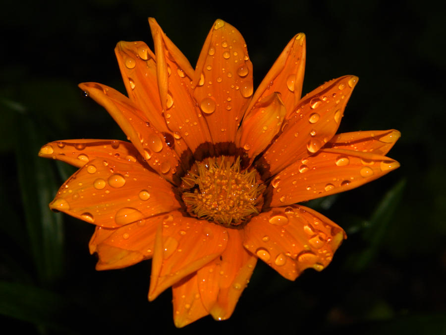 Orange Beauty by Hunter-Arkaman
