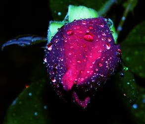 The Rose's Magic by Hunter-Arkaman