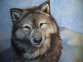 wolf on velour by spocha