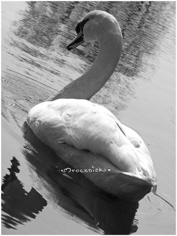 ..::White Beauty::.. by MroczniaK