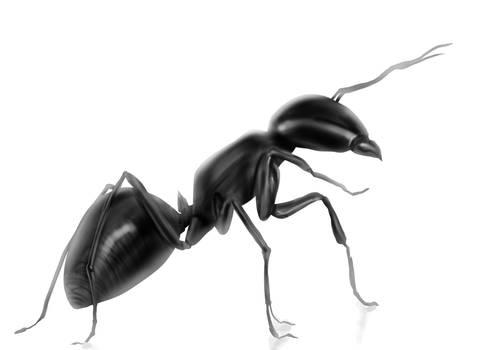 Ant study
