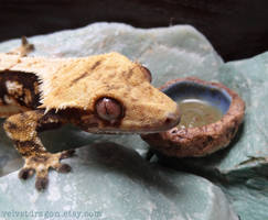 Crested Gecko Juxtaposed with Geode Bowl