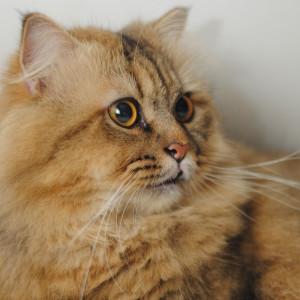 annaoi's Profile Picture
