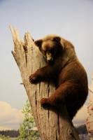bear by MissKayaStock