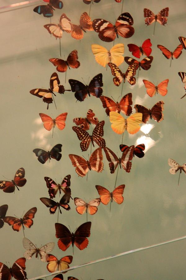 butterflies by MissKayaStock