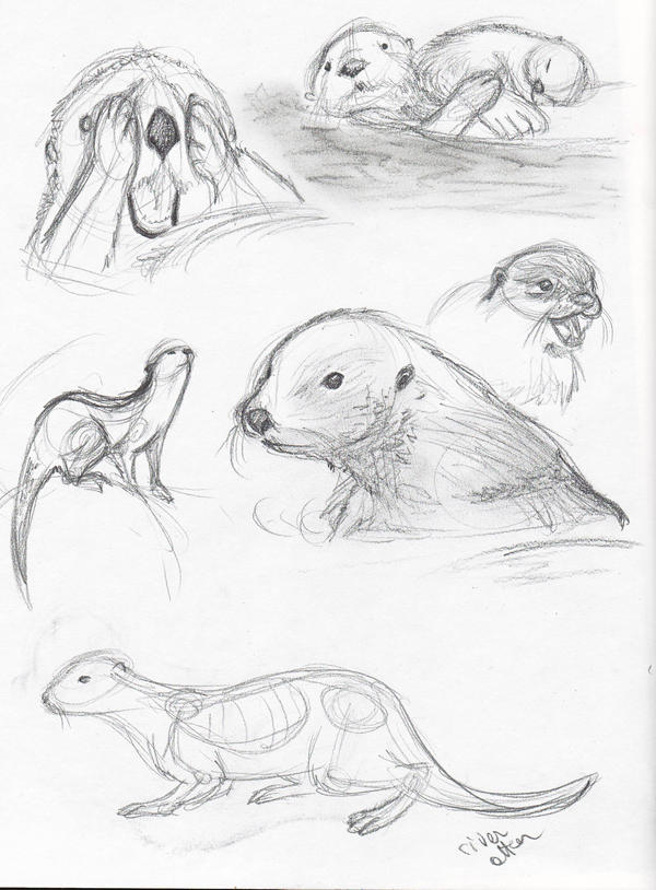 Life Drawing - Otters ...