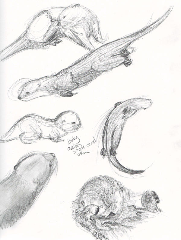 otter drawings Gallery