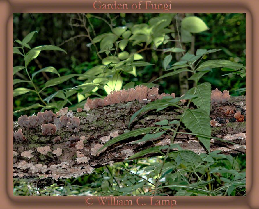 Garden-of-Fungi-by Vermundr by Vermundr