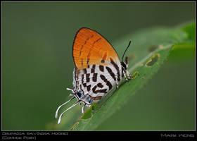 CCA Butterflies 240508 I