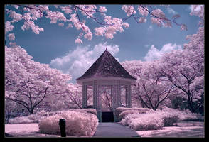 my very first attempt on ir