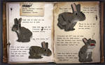 EcoCraft Journal Entry // Eastern Cottontail