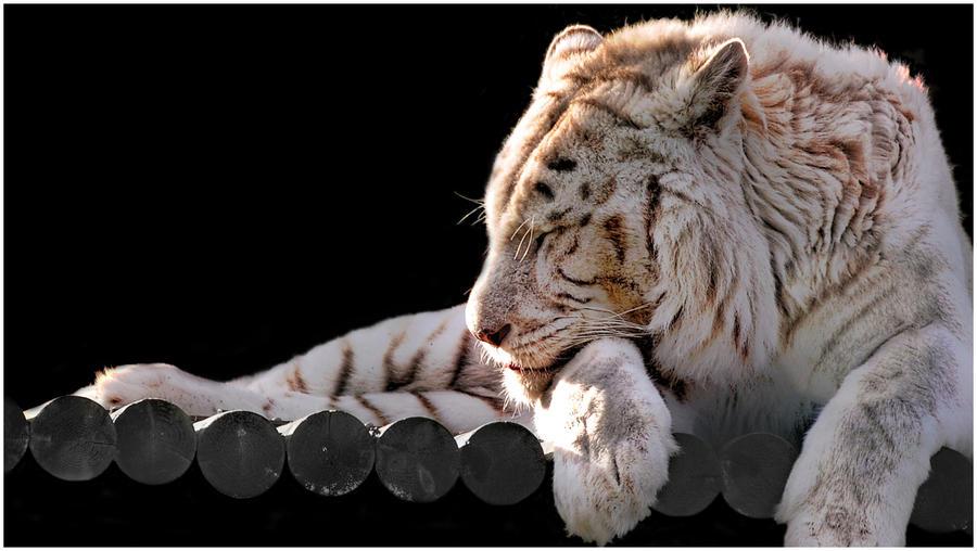 White Tiger by Kem2000