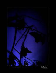 Bat-Trio