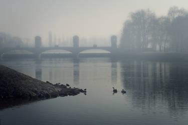 swans by hadeeldar