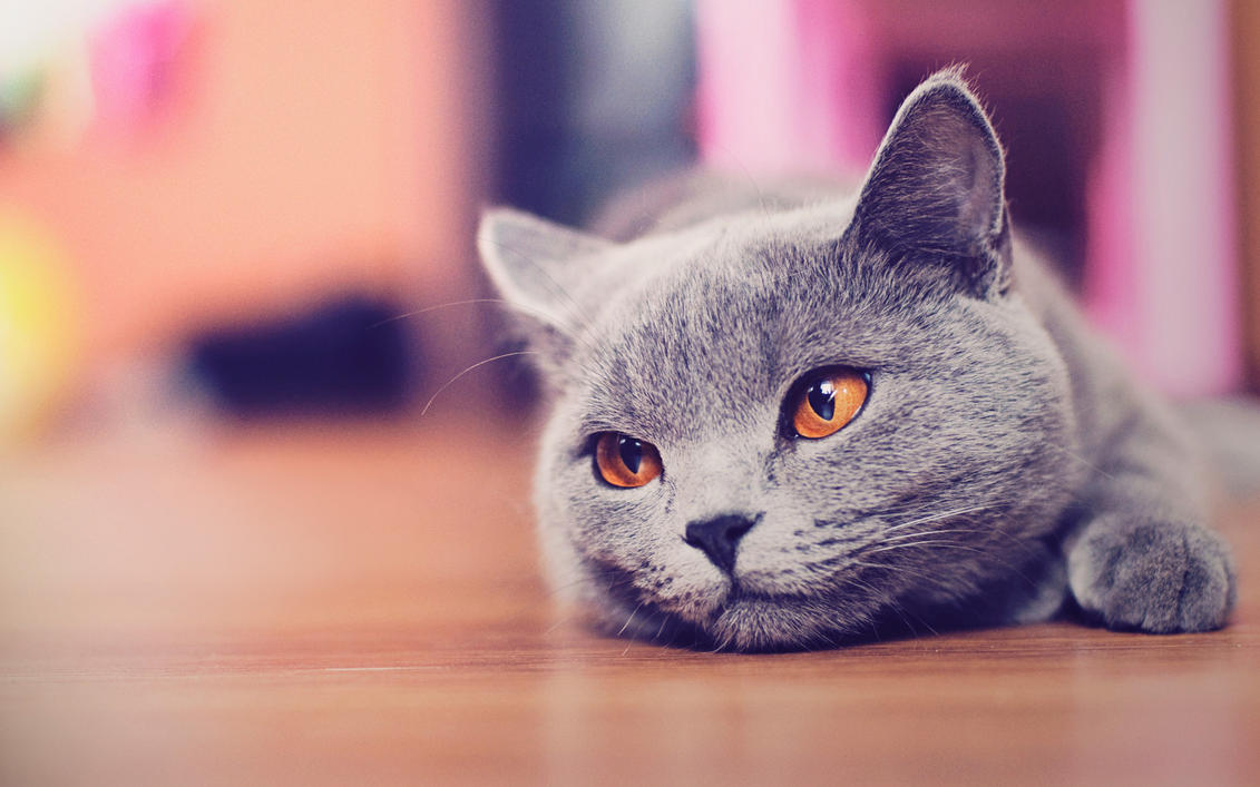 Baby Cute Cat Wallpapers Desktop Watching These Pretty Cats In