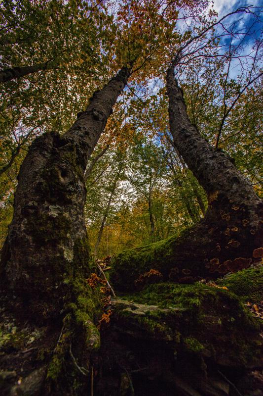 Autumn Omega by BaciuC