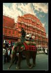 Elephant at Hawa Mahal - Color