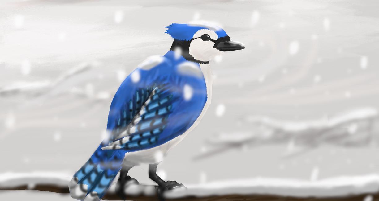 Winter Jay by Yodawgyoutalkin2me