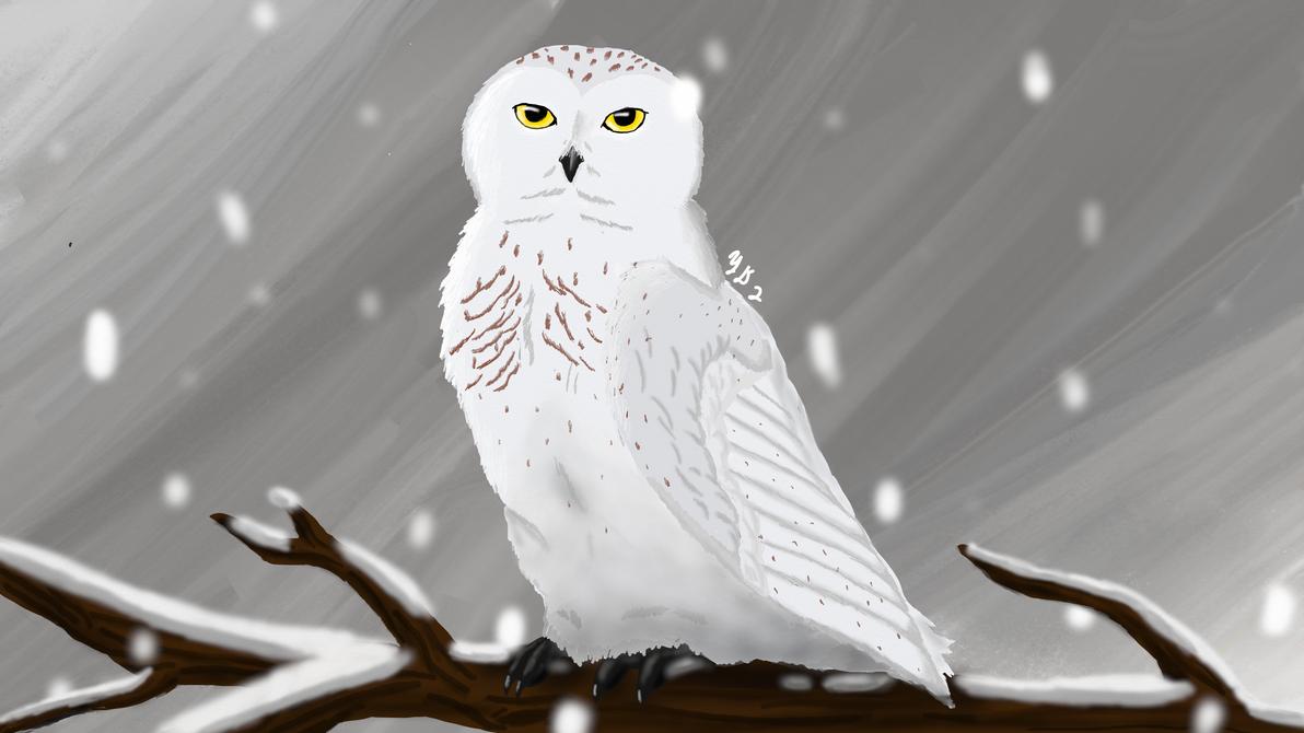 Snowy Owl by Yodawgyoutalkin2me