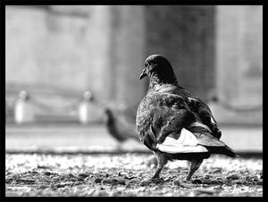 A pigeon's perspective...