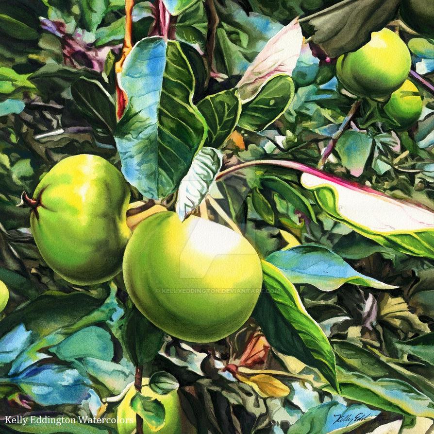Baby Apples by KellyEddington