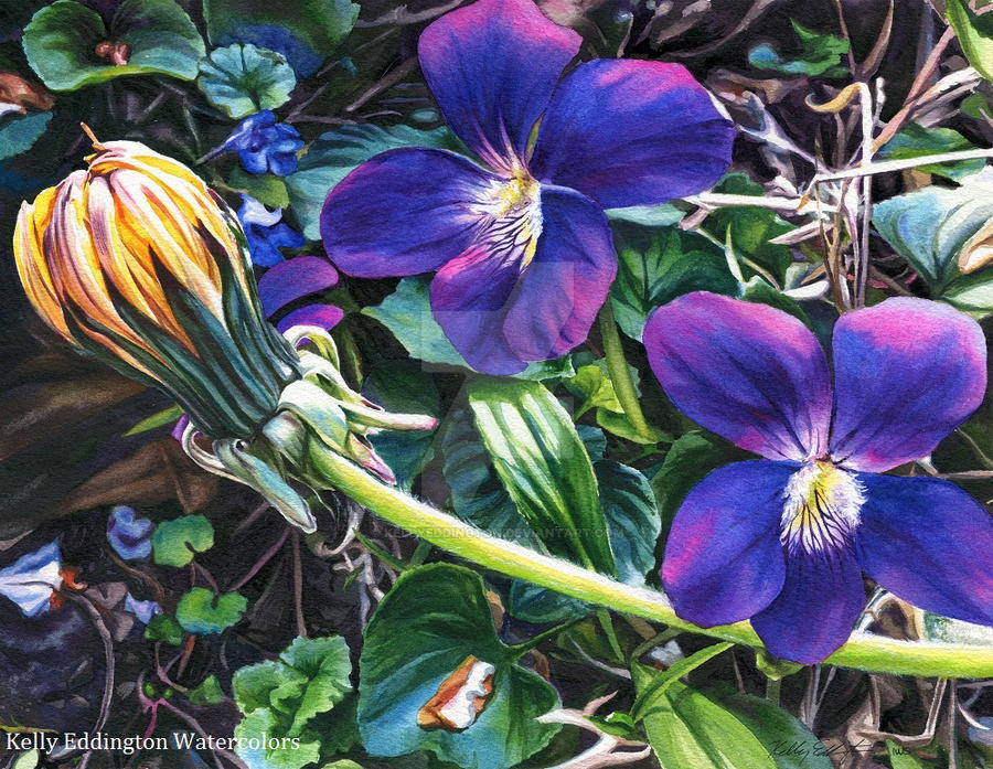 Dandelion with Violets by KellyEddington