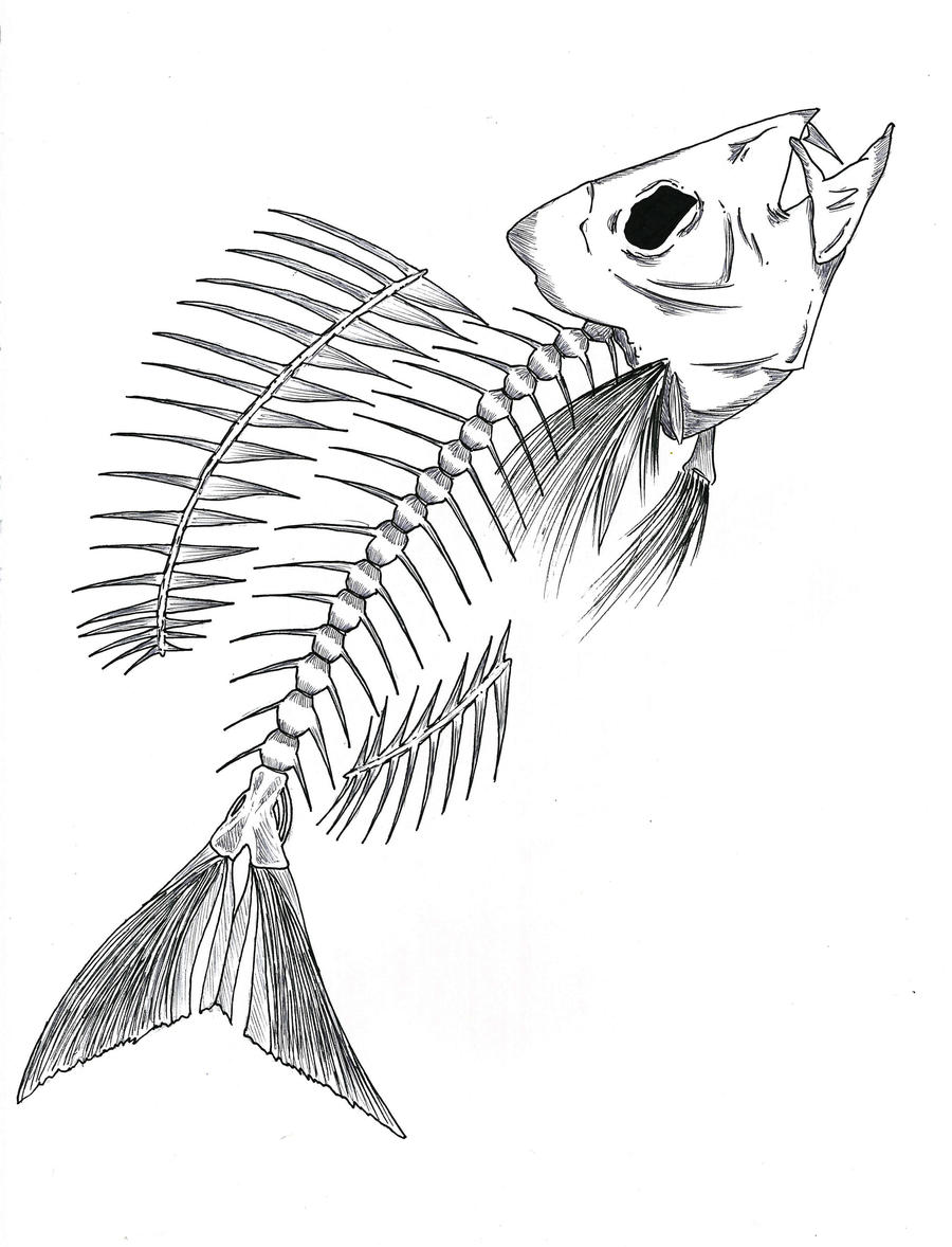 Fish skeleton by shadow wolves666 on deviantart for Fish drawing pictures