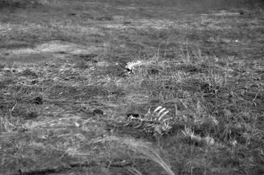 Bones in black and white