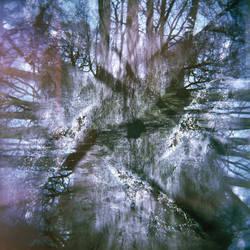 360 Holga trees by pdtnc