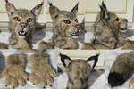Bobcat Costume - Sold