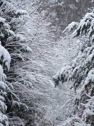 Wonders Of Winter 2