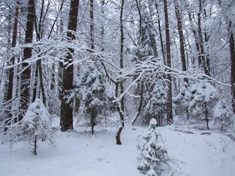 Wonders Of Winter 3