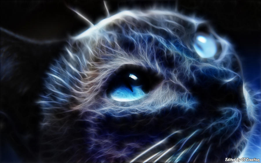 Black Cat With Blue Pearl Eye by uicreation