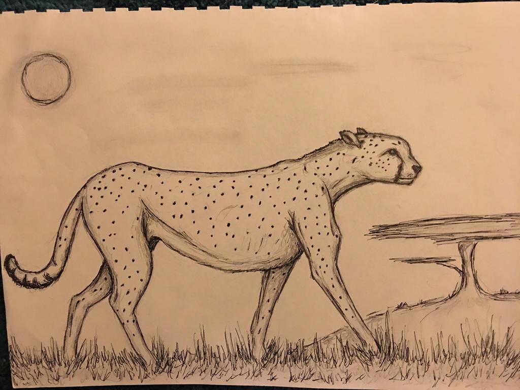 Cheetah by conwaysuccess