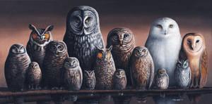 Owls of Canada
