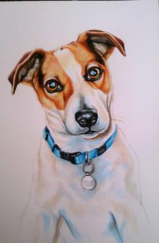 Watercolour portrait of Chuck Norris