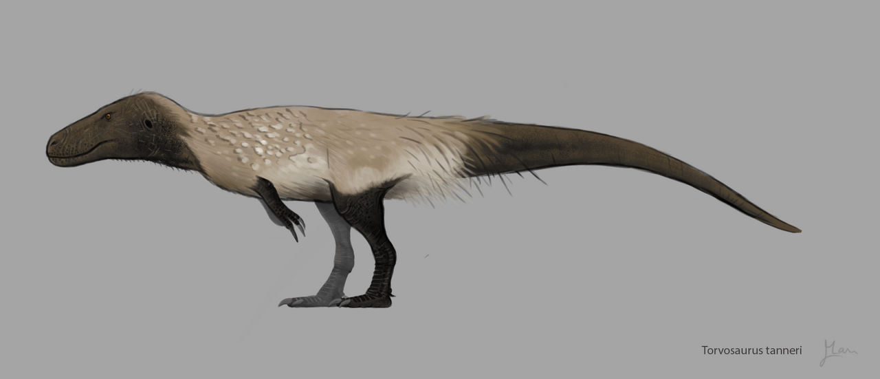 Torvosaurus tanneri design by MoriceMonkey93 on DeviantArt