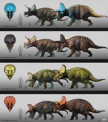 Triceratops Concept Design by MoriceMonkey93