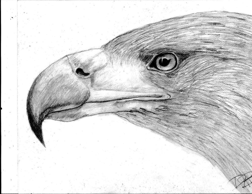 Easy Eagle Head Drawings | www.imgkid.com - The Image Kid ...